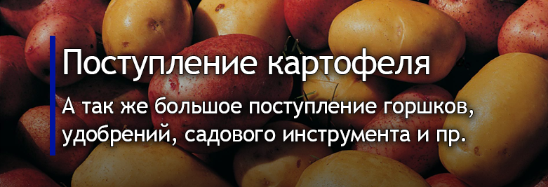 баннер картошка.png