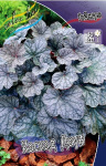 Heuchera Cascade Dawn