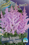 Astilbe Little Visions In Purple