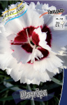 Dianthus Show Girl