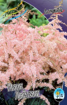 Astilbe Pink Lighting
